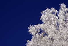 Free Frosty Tree Stock Image - 12560421