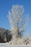 Frosty Tree Royalty Free Stock Photo