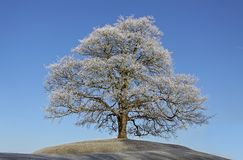 Frosty tree Stock Photo