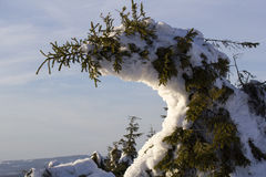 Frosty Tree Fotografie Stock
