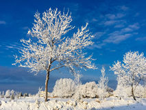 Frosty Tree Against Blue Sky Immagini Stock
