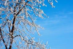 Frosty tree and blue sky Royalty Free Stock Photos