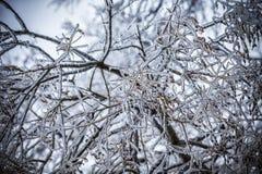 Frosty tree branch in winter Stock Photo