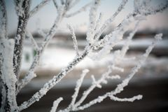 Frosty tree branches Stock Images