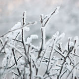 Frosty Tree Branches And Twigs nevado, close up macro da grande geada detalhada, detalhe delicado de Bokeh, Frost branco e contex Imagem de Stock Royalty Free