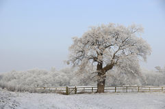 Frosty tree in countryside royalty free stock image