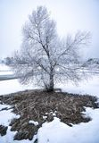 Frosty Tree In Winter Landscape. Stock Image