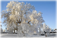 Frosty tree landscape. In Sweden stock photography