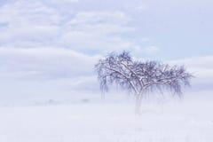 Frosty Tree solo Fotografia Stock Libera da Diritti