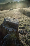 Frosty tree stump. Early morning frost covered tree stump Royalty Free Stock Images