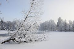 Frosty Tree On tombé un lac congelé en Scandinavie Photo stock