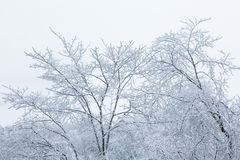Frosty tree tops Royalty Free Stock Image