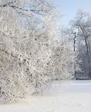 Frosty Tree In un paysage de Milou Image libre de droits