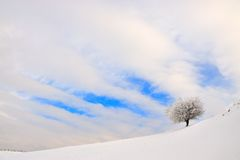 Frosty tree in winter Stock Photo