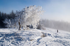 Frosty tree. Winter landscape from Krynica-Zdroj in Poland. In the foreground, a tree deformed by strong winds is covered with frost Stock Image