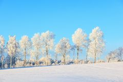 Frosty treeline in winter landscape Royalty Free Stock Photos