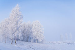 Frosty trees Stock Image