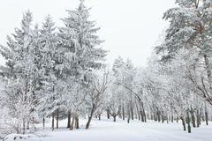Frosty trees in the city in cold winter day royalty free stock photography