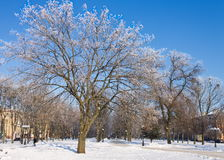 Frosty trees in the city in sunny winter day royalty free stock images