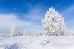 Frosty trees in cold day Stock Images