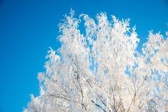 Frosty trees Stock Photo