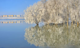 Frosty trees on Danube river Royalty Free Stock Photography