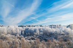 Frosty Trees debajo del cielo azul con el rastro del avión Foto de archivo