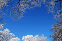 Frosty trees frame Stock Image