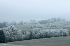 Frosty trees. Frost on trees and fields in soft hills, reminding of infrared photography Royalty Free Stock Photos