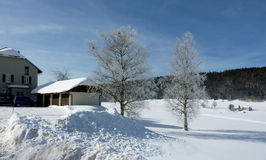Frosty trees and houses by winter Stock Photo