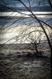 Frosty trees. Lake with frosty trees early morning Stock Photography