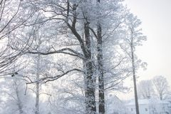Frosty Trees In Milou Misty Landscape Photos stock