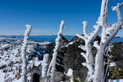 Frosty trees on mountain top. Blue sky, rocks and frost. Icicle ridge summit. Cascade Mountains. Seattle. Leavenworth. Washington. United States Royalty Free Stock Image
