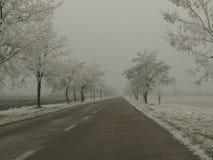Frosty trees Royalty Free Stock Photos