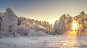 Frosty trees on sunrise with yellow sunlight in winter morning. Snowy winter landscape. Christmas background. Bright sunbeams on trees with hoarfrost. Vibrant stock photography
