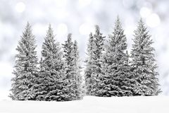 Frosty trees with twinkling background Royalty Free Stock Photo