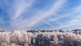 Frosty Trees under Blue Sky with Trail of the Plane. Frosty Trees in the Forest under Blue Sky with Trail of the Plane stock video