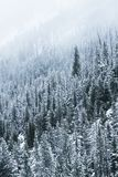 Frosty Trees in Winter Royalty Free Stock Images