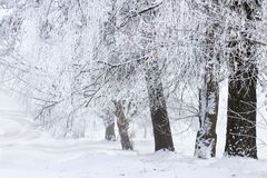 Frosty trees. Winter nature. Landscape. Christmas background stock photos