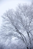 Frosty trees in winter Stock Images