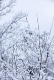Frosty trees in winter Stock Photos
