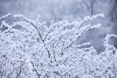 Frosty trees in winter Royalty Free Stock Image