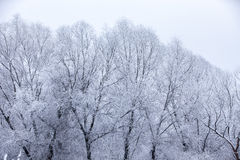 Frosty trees in winter Stock Photography