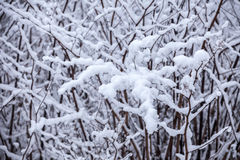 Frosty trees in winter Stock Photo