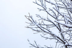Frosty trees in winter Royalty Free Stock Photography