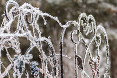 Frosty trellis. Hoar frost on a garden trellis after a freezing rain Royalty Free Stock Photos