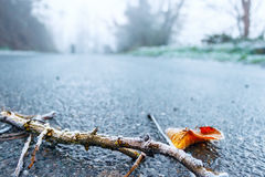 Frosty twig on iced road. A closeup of a brown frosty twig with an orange leaf on a blue iced asphalt road royalty free stock photos