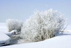 Frosty and very cold. Frost covered willows next to a fresh water stream on a very cold winter day Stock Photo