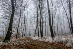 Frosty walk Stock Photo