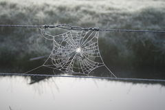 Frosty Web Royalty Free Stock Photo